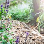 natural landscape with purple flowers