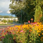 streetscaping with yellow and pink flowers