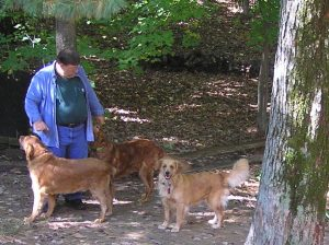 man in woods with three dogs
