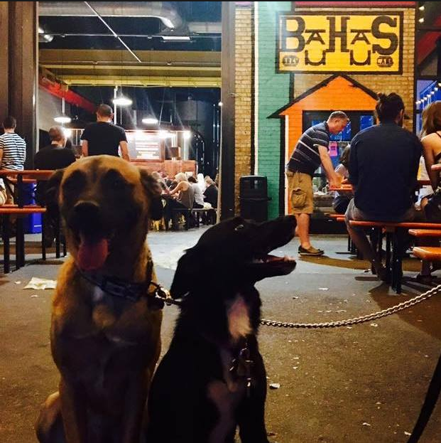 Halsey and Stryker enjoy going to breweries with their human pals.